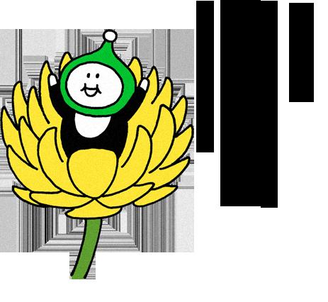 菊花開(きくのはなひらく)
