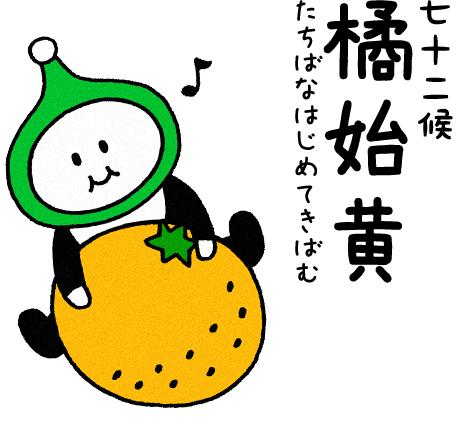 橘始黄(たちばなはじめてきばむ)