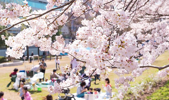 春の訪れを家族で楽しむ「お花見」