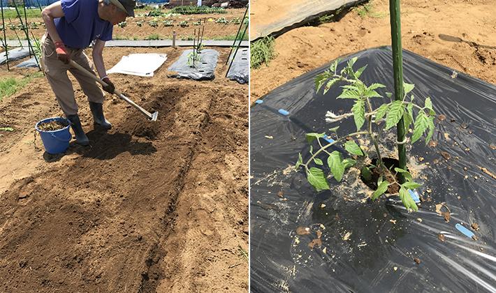 作付け計画も万全のサポート♪夏野菜の苗を植える!の巻