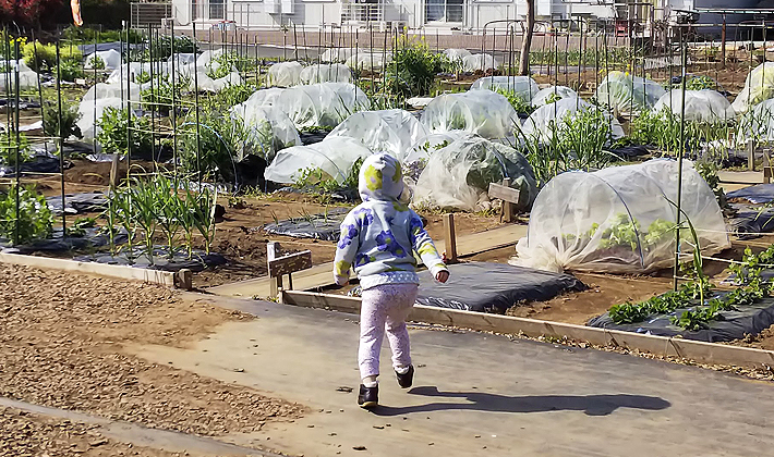 シェア畑で野菜づくり<br> ~てんとう虫は見つかるかな?~