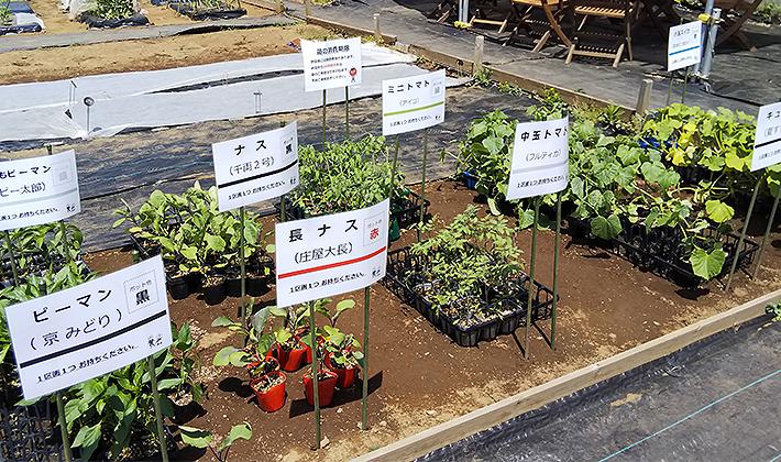 シェア畑で野菜づくり<br>~トマト、ナス、ピーマン…春夏野菜を植え付け!~