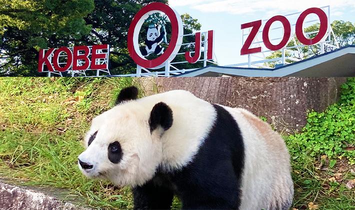 パンダに会えるのもあと少し!神戸市立王子動物園に行ってみませんか?