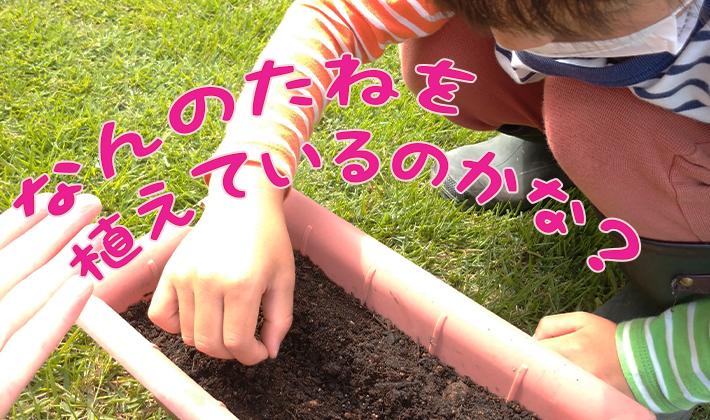プランターで家庭菜園してみました!~苗の植え付けと種まき~